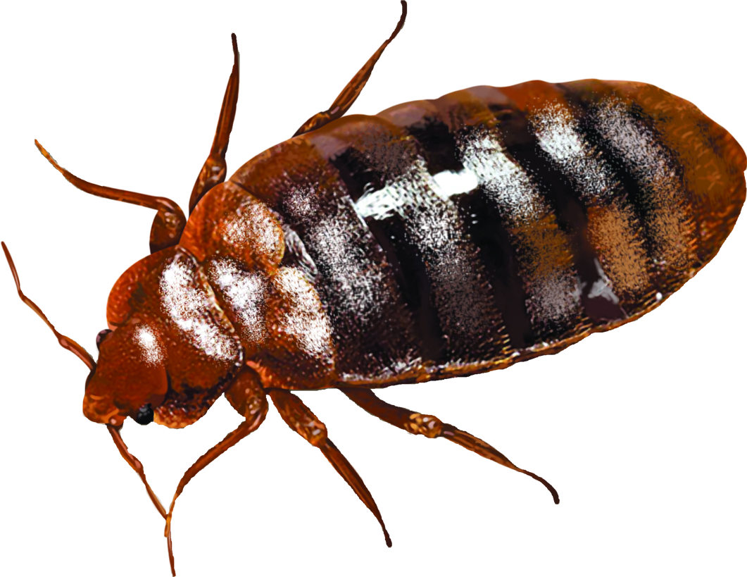 Green Akers Pest Control Falls Church Bed Bug Location Green Akers Pest Control Llc